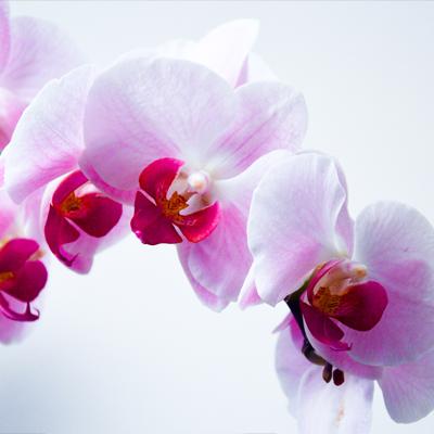 Fleuretfleurs
